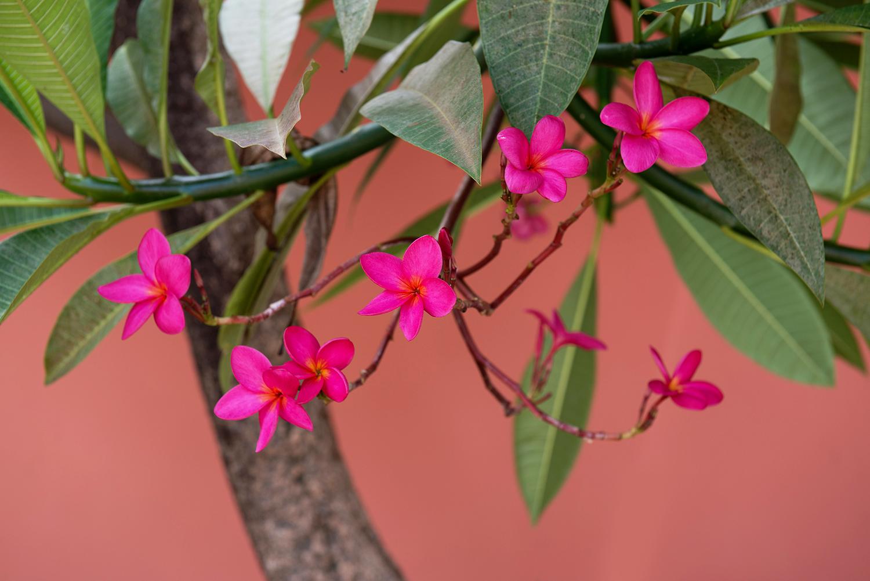 PuertoRico_Flowers
