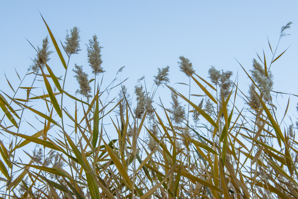 180360_CornCreek_Grass